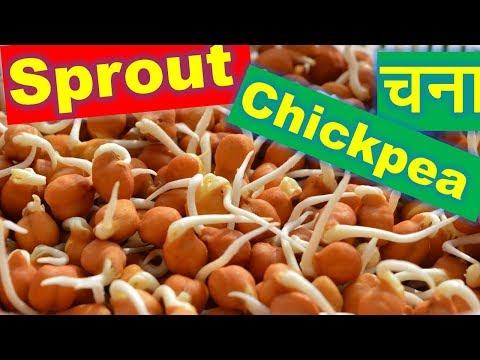 Easy Chickpea Sprout | चना को कैसे अंकुरित करें