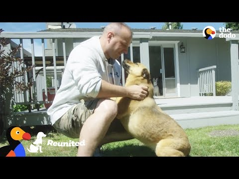 Dog Reunited with Military Dad After 2 Years Overseas | The Dodo Reunited