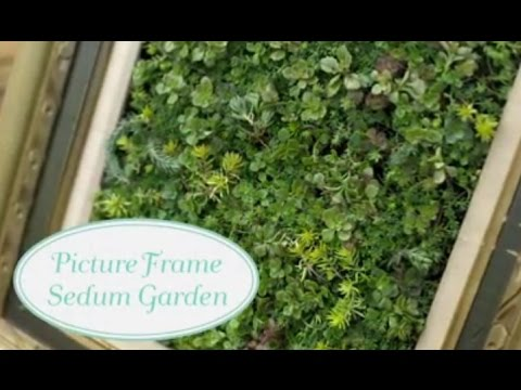 How to Make A Picture Frame Sedum Garden