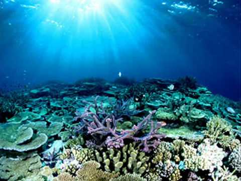 Australia's Great Wonder The Great Barrier Reef
