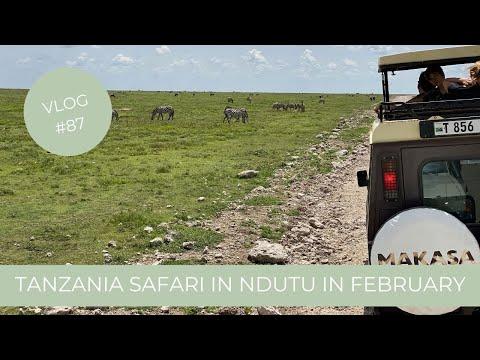 Our Tanzania Safari in Ndutu South Serengeti Part 1 | Makasa Tanzania Safari ǀ VLOG #87