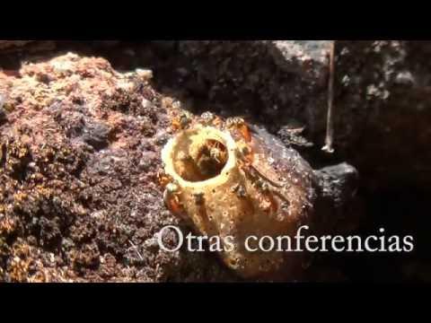 Resumen Seminario ICTA 2014 - Trabajos sobre abejas