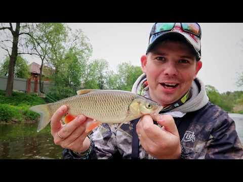 Рыбалка на сломе погоды | Зачем нужен кренк SSR??? | Голавль на микроречках | ВихровLIFE