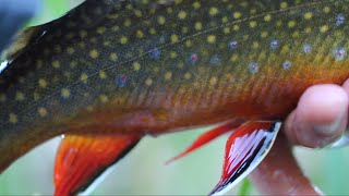Underwater Takes - High Mountain Lakes - Fly Fishing