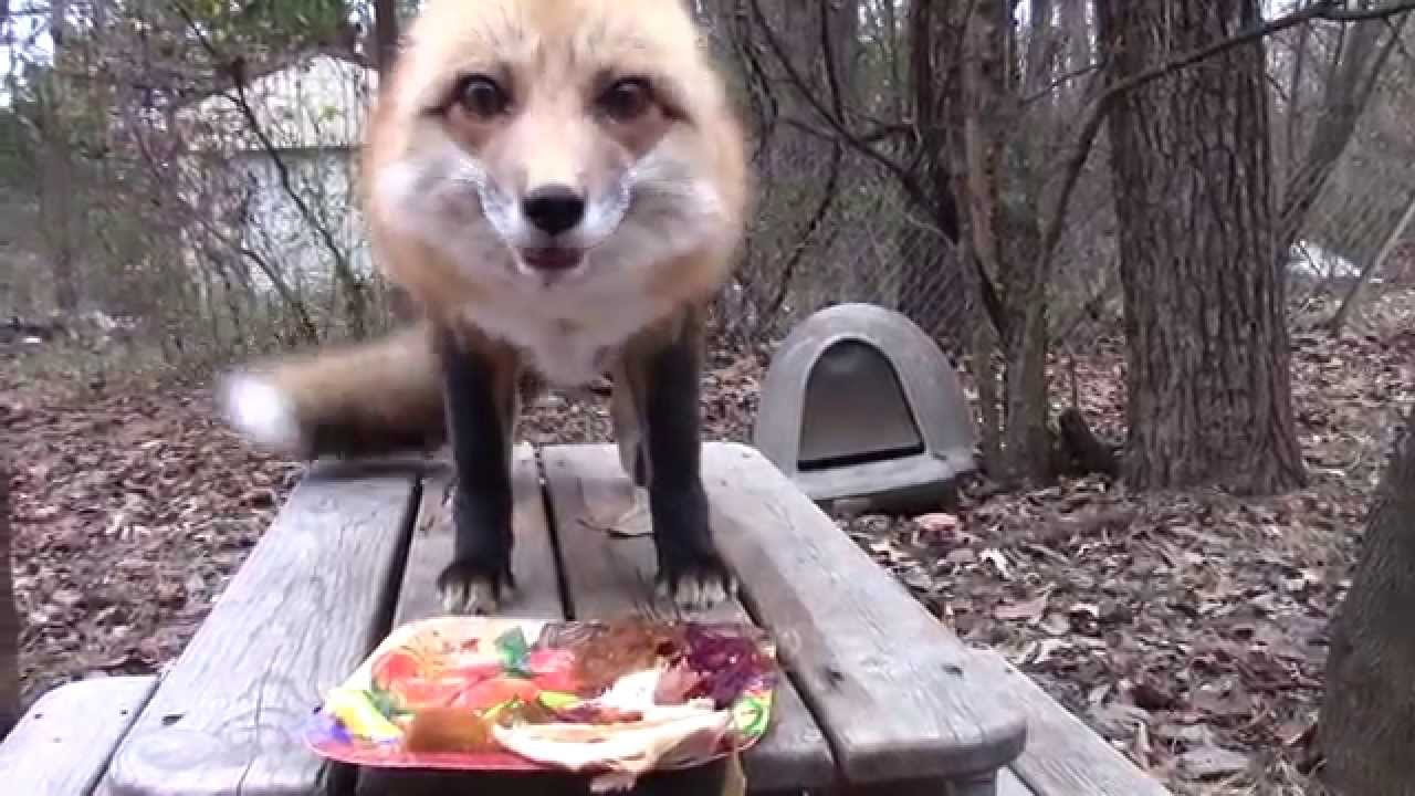happy thanksgiving ronron