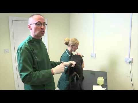 Pet Care Tips- How to empty your dog's anal glands