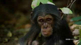 Sir David Attenborough Introduces Dynasties   January 19 at 9pm   BBC America