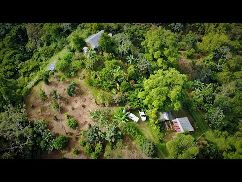 Tropical Food Forest & Natural Building Tour w/ Raw Vegan Chef (Costa Rica)