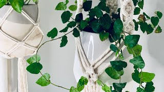 Macrame Plant Hanger | Diamond Pattern | Beginner Tutorial
