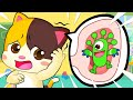 No No Scratch Your Ear | Doctor Cartoon | Boo Boo Song | Kids Songs | Baby Cartoon | BabyBus