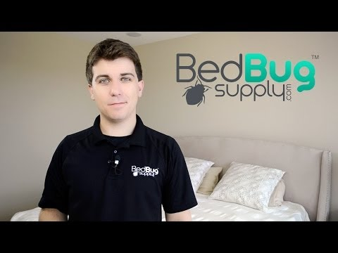 How to Get Rid of Bed Bugs in 4 Easy Steps