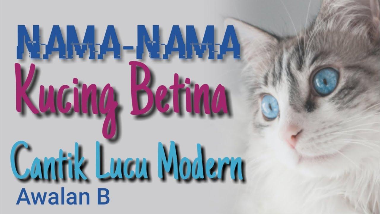 Nama Nama Kucing Yang Bagus Untuk Kucing Betina Cantik Lucu Peaknose Persia Himalaya Awalan B Youtube