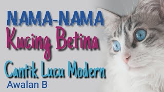 Nama Nama Kucing Yang Bagus Untuk Kucing Betina Cantik Lucu Peaknose Persia Himalaya Awalan B
