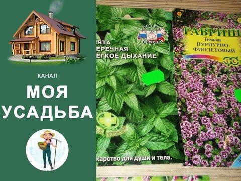 Как выращивать пряные травы на подоконниках
