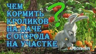 Чем кормить кролика с огорода на даче |  Дневник Кроликовода №19| Арболитич
