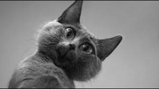 Смешные коты и кошки. Прикольные видео. Пугливые кошки.