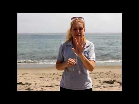 Shark week in Santa Barbara