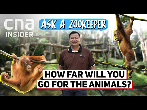 Do Animals Feel Love? Singapore Zookeepers On What They'd Do For Their Charges