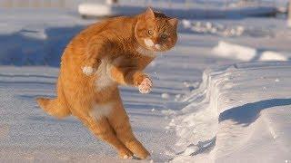 Смешные коты кошки и другие животные Funny Cats 2019 – ЗАПРЕЩАЕТСЯ СКУЧАТЬ ОЧЕНЬ КОМИЧНО