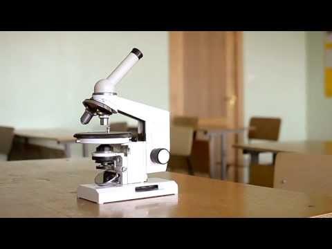 Как работать с микроскопом