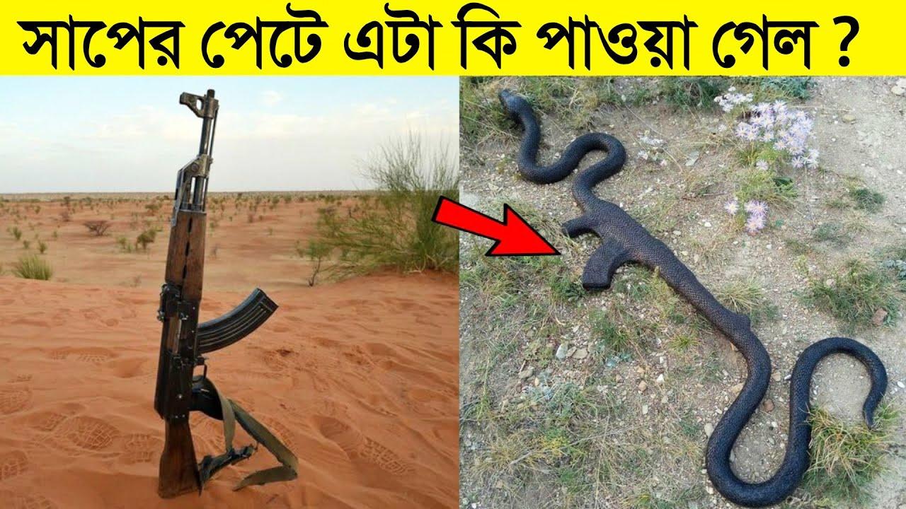 সাপের পেটে পাওয়া গেলো অদ্ভুত জিনিস যা দেখলে হতভম্ব হয়ে যাবেন | Strange Things Swelled by Snake
