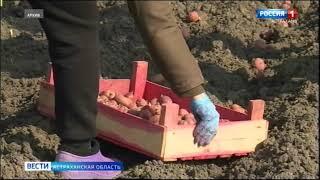 В Астраханской области не будут корректировать производство сельхозпродукции