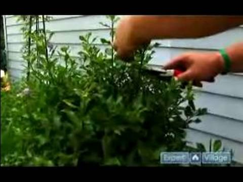 How To Prune Care For Trees Shrubs Shrub Bushes