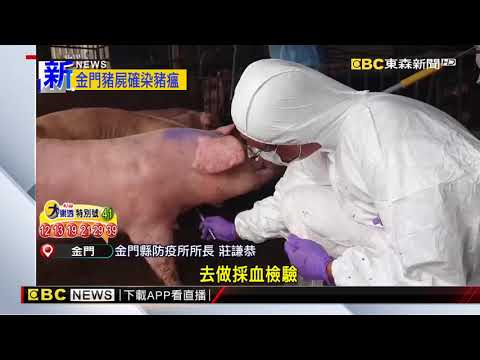 金門海漂豬確染非洲豬瘟 肉品將禁輸台至少一周