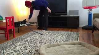 Husky Puppy Learns Basic Obedience Training
