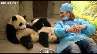 Martin_Meets_the_Panda_Cubs_-_Nature's_Miracle_Babies_-_Episode_One_-_BBC_One