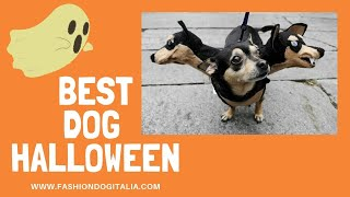 Best Dog Halloween Costumes Compilation ever! Funny, scary and cute!