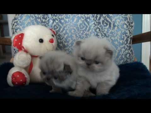 Fuzzy Fuzzy Cute Cute Kittens