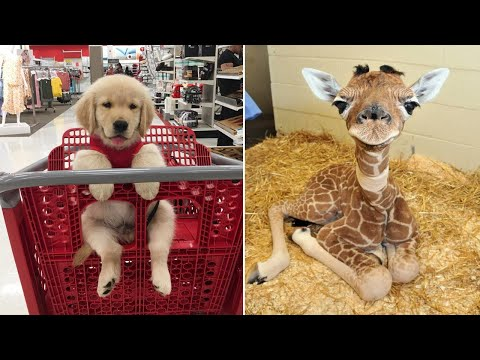 Baby Animals 🔴 Funny Cats and Dogs Videos Compilation (2020) Perros y Gatos Recopilación #7