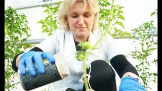 Инновационные технологии для выращивании растений и рассады
