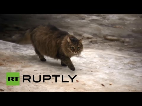 Russia: Meet the hero cat who SAVED an abandoned baby