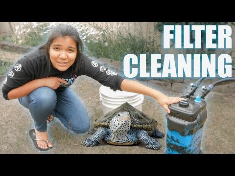 turtle tank CANISTER FILTER CLEANING