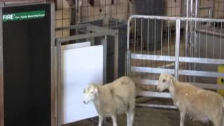Osborne Fire Performance Testing System For Sheep And Goats