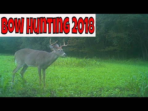 GROUND BLIND BOW HUNTING – DEER HUNTING 2018 BOW