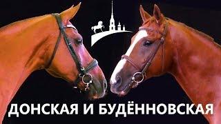 Донская и буденновская порода /Золотая лошадь /Золото России /Конная выставка Иппосфера /Дончак