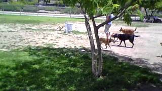 Buttercup At North Hollywood Dog Park