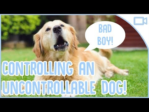 how-to-keep-your-dog-under-control!