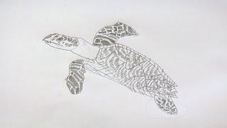 OSCAR DOES ART - SEA TURTLE