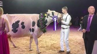 Swiss Expo 2020 Championne Holstein