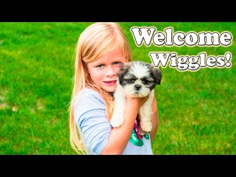 Welcome to TheEngineeringFamily Wiggles a funny Puppy Surprise