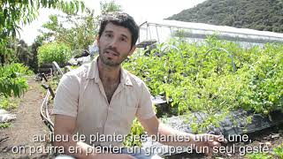 Grow beetroots in clusters / Planter les betteraves en groupe
