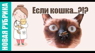 Новая рубрика: Если кошка... ?!?(Открываем новую рубрику в которой будем отвечать на популярные подсказки Яндекса на тему животных. Помоги..., 2016-03-15T16:49:54.000Z)