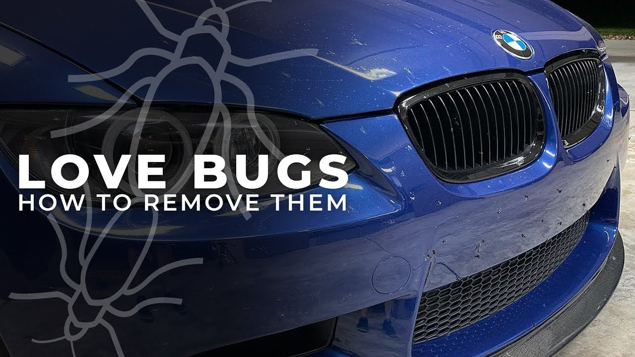 remove love bugs from car