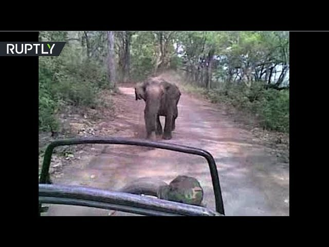 Hot pursuit: Elephant chasing jeep with tourists in safari park in India