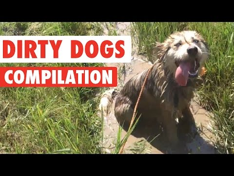 Dirty Dogs Video Compilation 2016