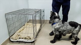 How to Crate Train Your Puppy or Dog | The Battersea Way